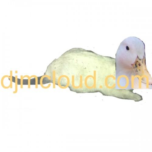 Cat Duck