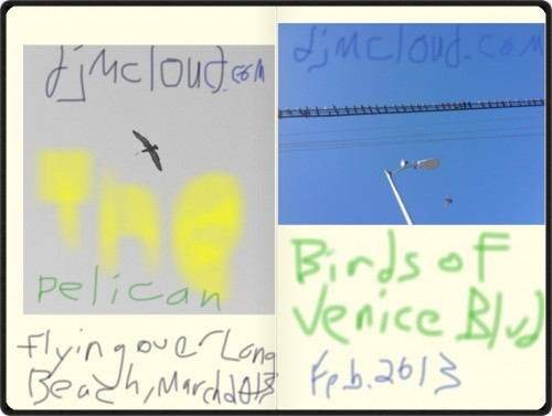 birds of CA